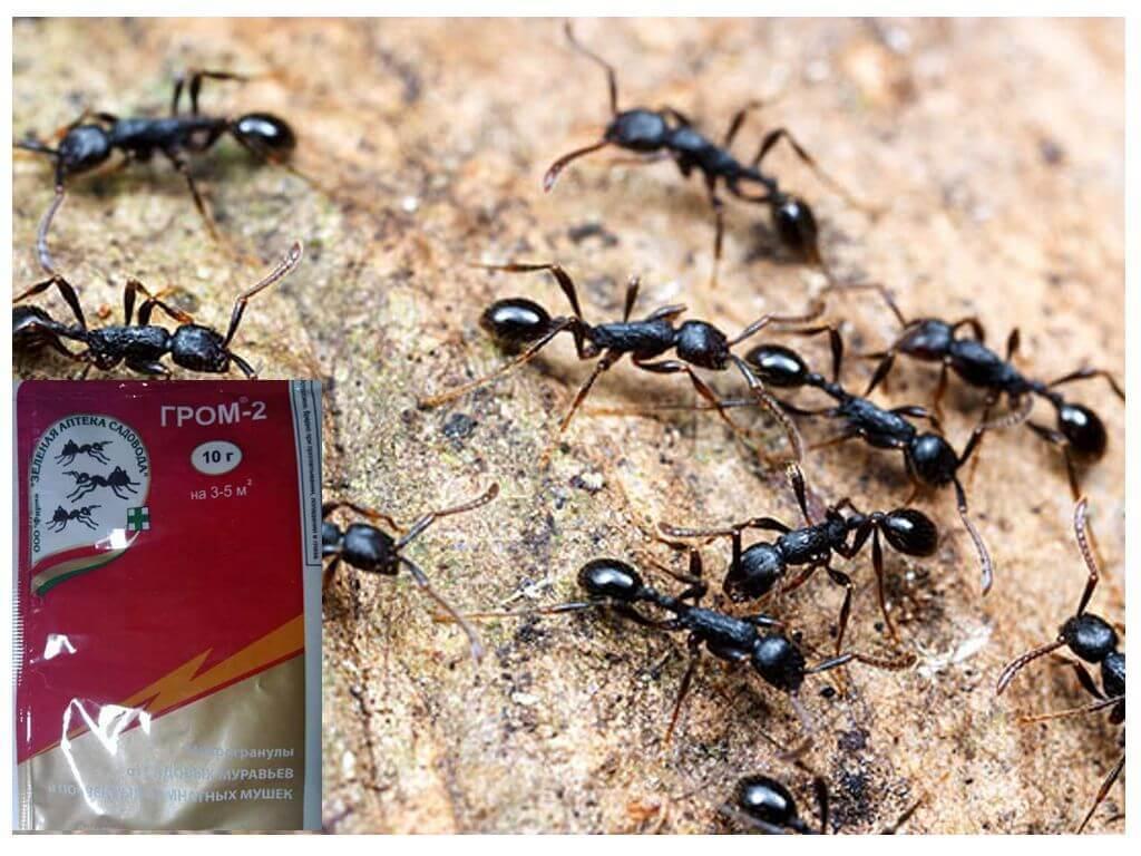 Как работает средство от муравьев гром 2