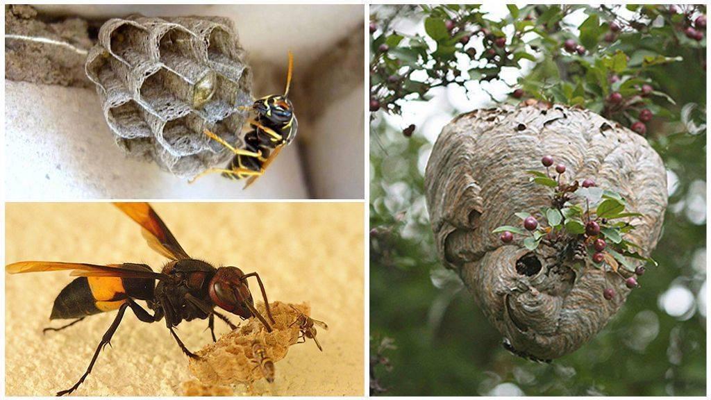 Как бороться и что делать с нападом пчел и пчелиным воровством?