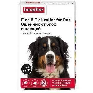 Стоит ли использовать ошейники от блох для собак? давайте разберёмся!