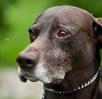 Как защитить собаку от комаров мошек. защита животных от комаров