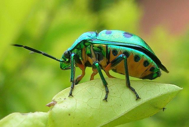 Бабочка аполлон: подробное описание с фотографиями