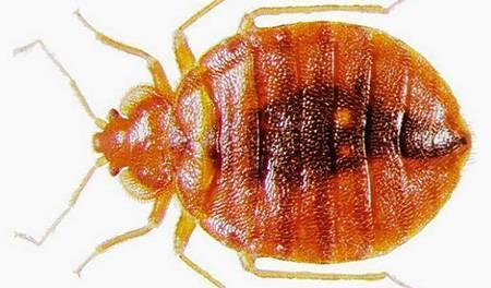 Чем опасны тараканы для человека и почему?