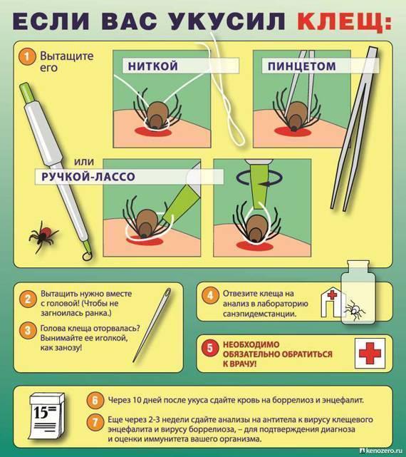 Укусы клещей — первые признаки, симптомы у человека, как выглядит укус, последствия и профилактика