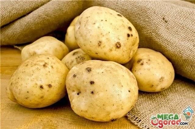 Картофельная нематода: злейший враг картофели
