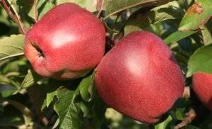 Как защитить плодовые кустарники и деревья от вредителей