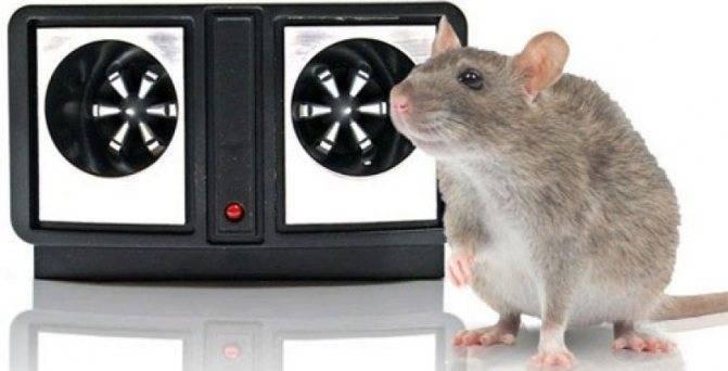 Топ-10 лучших отпугивателей крыс и мышей
