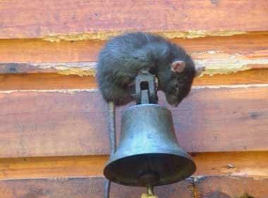 Сетка для защиты каркасного дома от грызунов