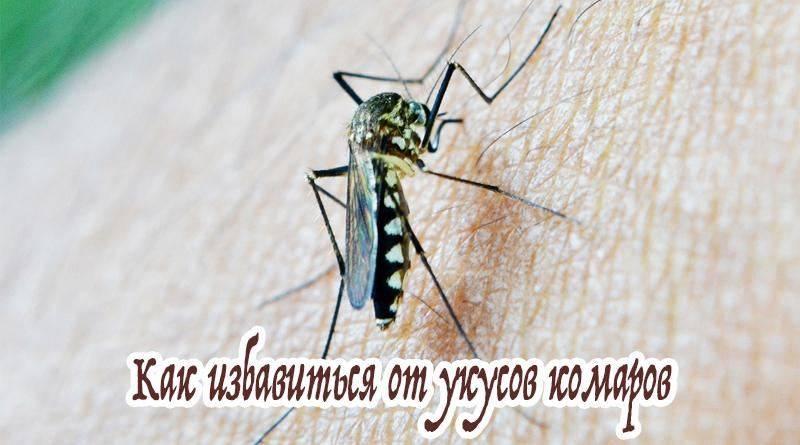 Почему чешется укус комара и какое средство лучше помогает?