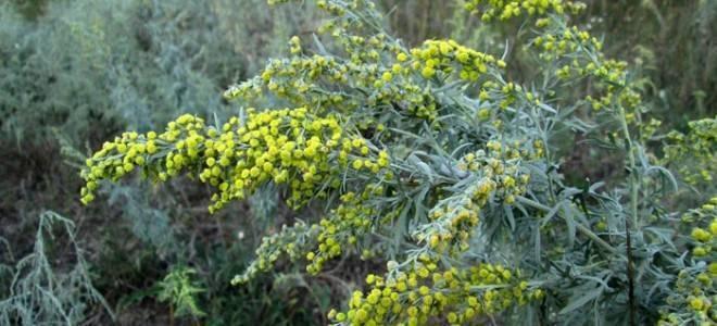 Какие травы использовать для борьбы с молью в квартире?