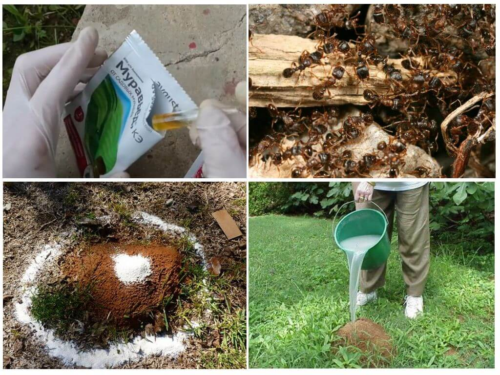 «муравьед» — защита от муравьев, портящих грядки, деревья и садовые дорожки