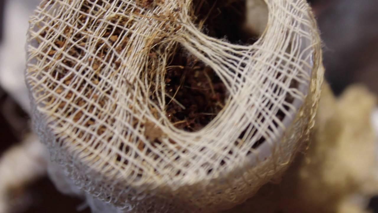 Основные правила разведения сверчков в домашних условиях. чем питается сверчок в природе и в человеческом жилье