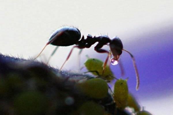 Маленькие труженики: какую пользу приносят муравьи