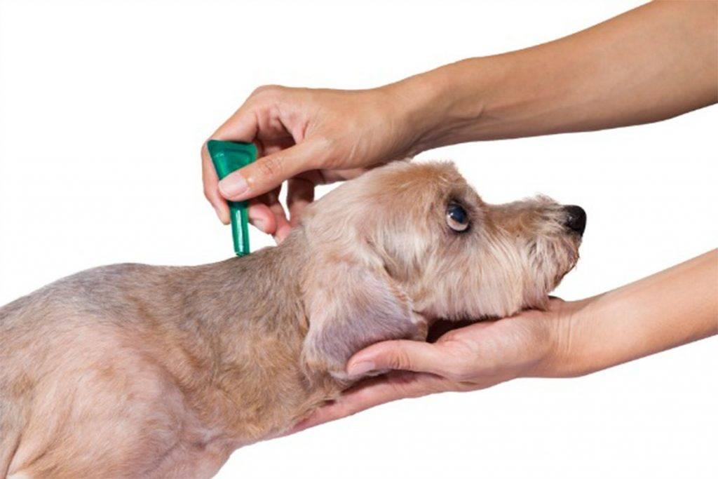 Чем обработать собаку от клещей