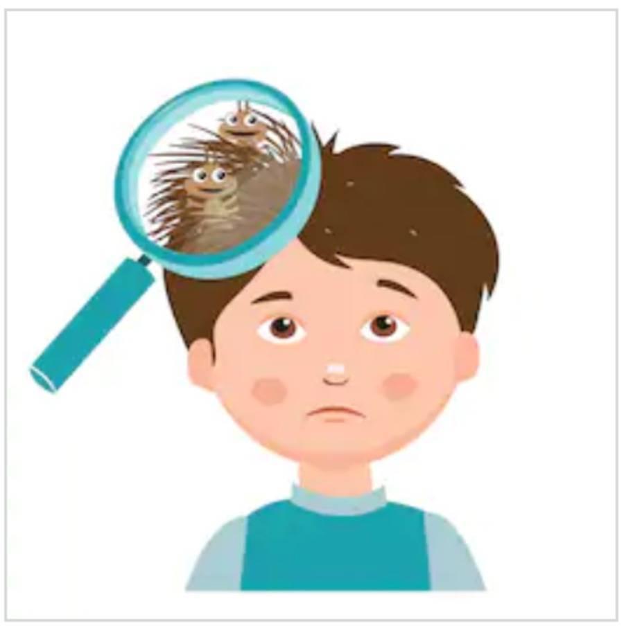 Берегите волосы смолоду: основные признаки вшей и гнид на голове человека и фото симптомов