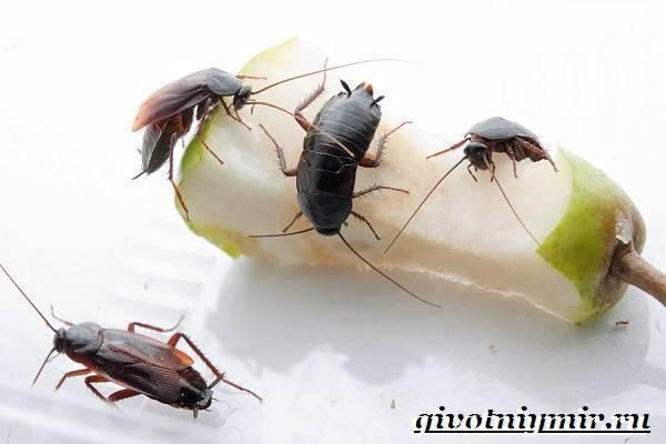 Огромные тараканы