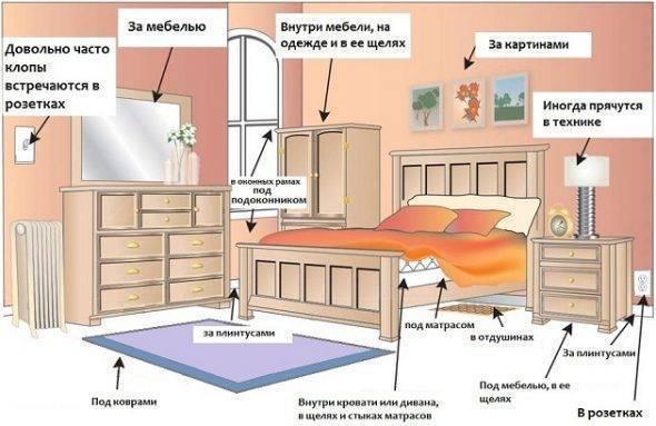 Где живут клопы в квартире и где прячутся днем?