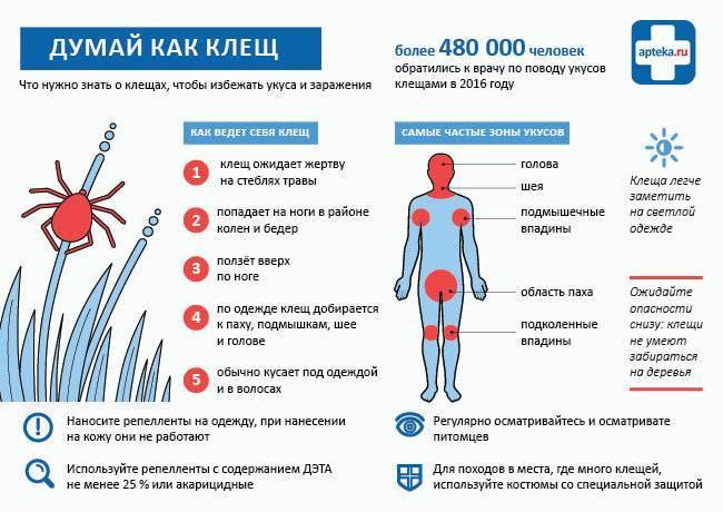 Можно ли заразиться инфекцией, если по телу прополз клещ? девять важных вопросов о том, как пермякам уберечься от клещей.