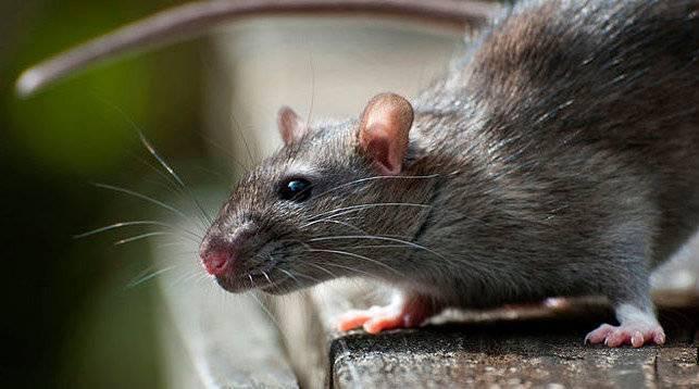 Что делать при укусе летучей мыши?