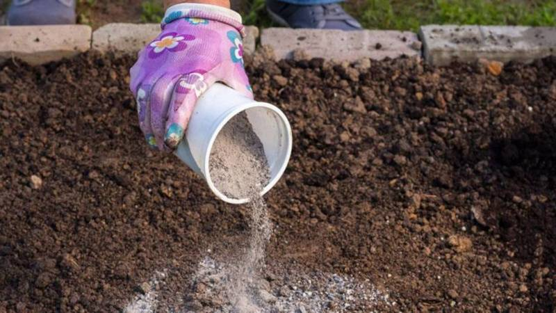 Как избавиться от проволочника на картофельном участке