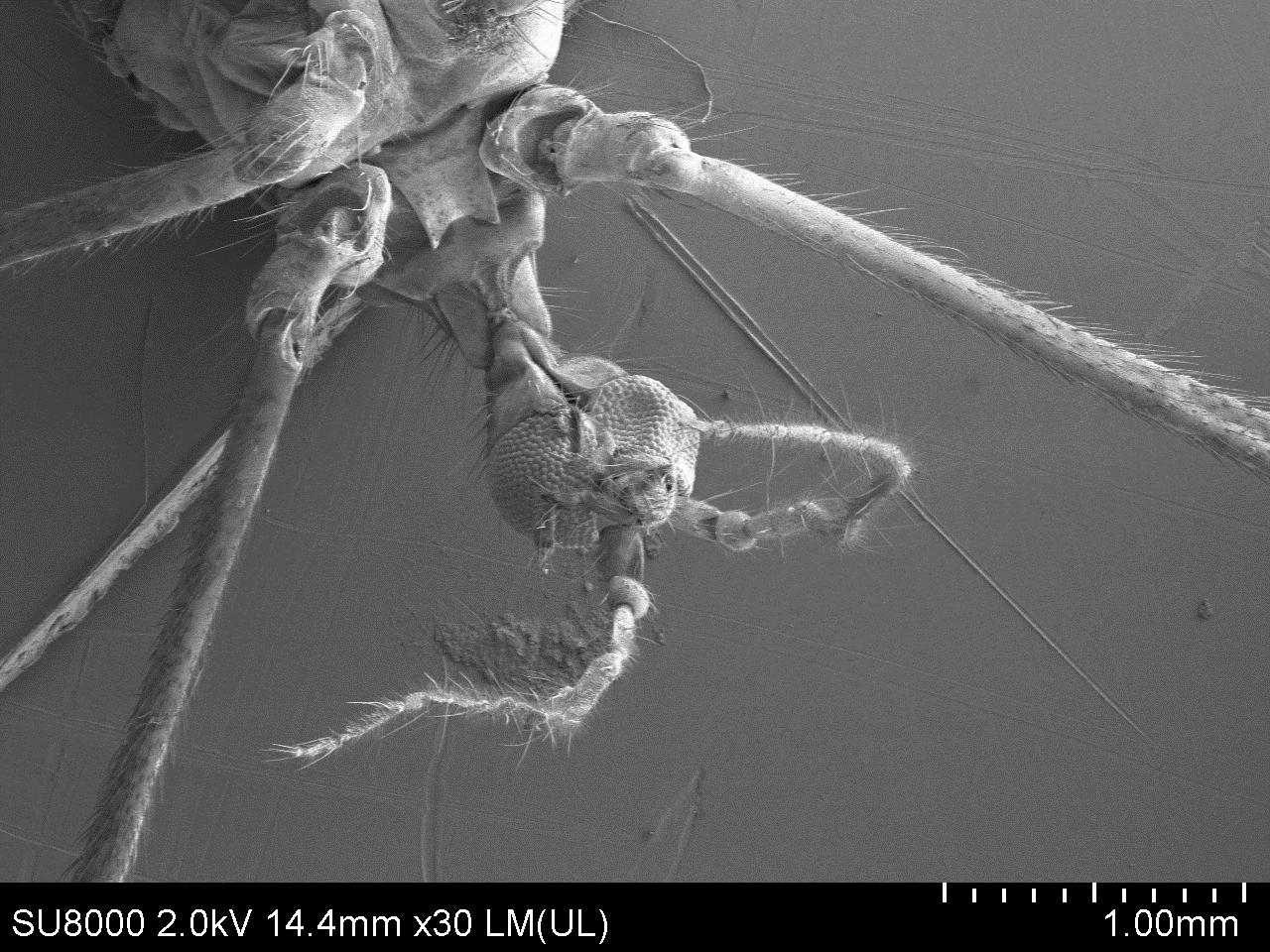 Интересные факты о комарах, или за что уважать кровососа. почему комары одних кусают, а других нет