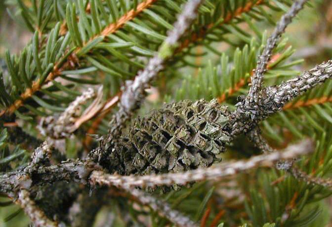 Как осуществляется борьба с тлей на плодовых деревьях? эффективные средства и препараты