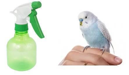 Что делать при заражении блохами волнистого попугайчика