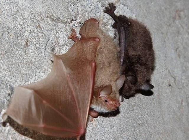 Сколько живут мыши?