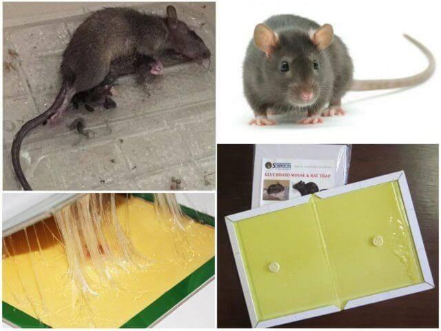 Эффективные способы удаления клея против мышей с разных поверхностей