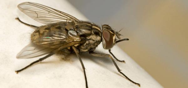 Как убить муху в доме?