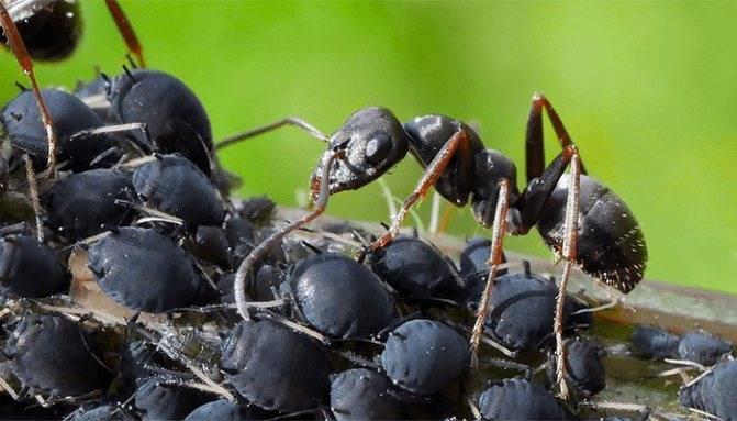 Что означают увиденные во сне насекомые? сонник