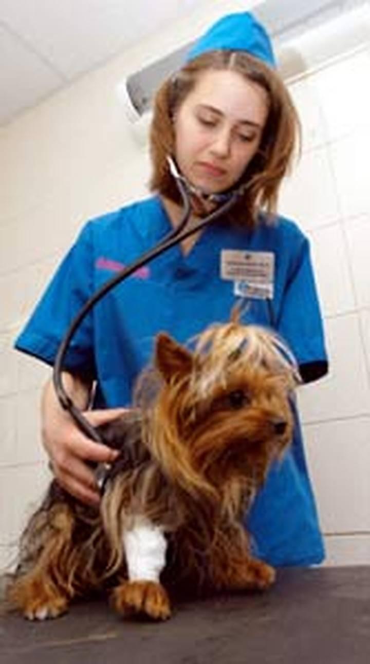 Собаку укусил клещ: что делать, первая помощь, последствия