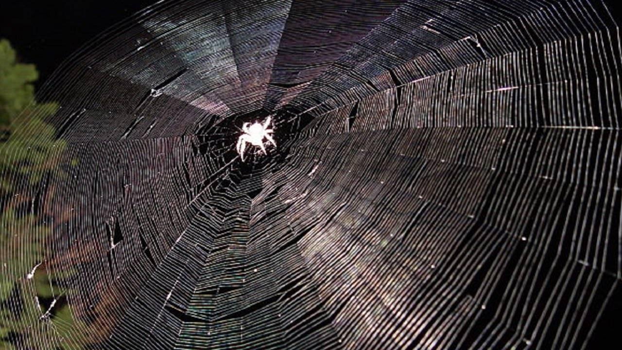Как паук плетет паутину