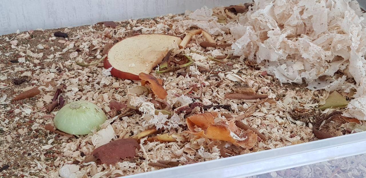 Мраморные тараканы питательный корм для экзотического питомца. разведение тараканов как бизнес как разводить тараканов в домашних условиях