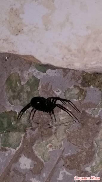 Пути появления пауков в квартирах