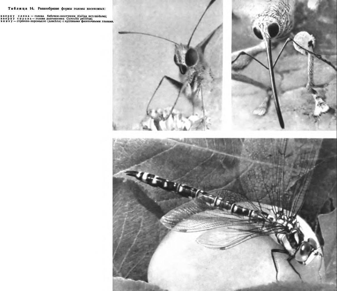 Мучнистый червец — как бороться на комнатных растениях