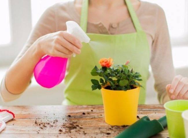 Цветочная мошка – как избавиться