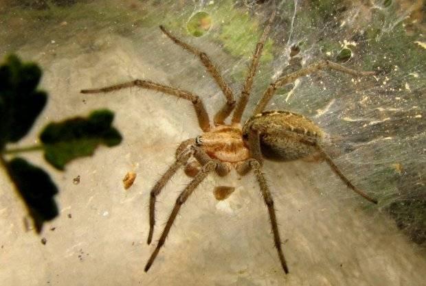 Как охотятся пауки? описание, фото и видео