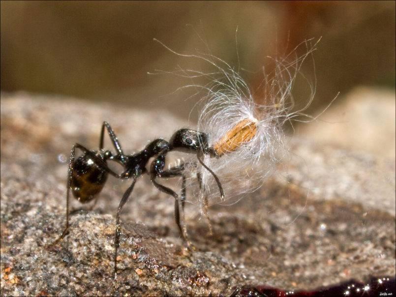 Маленькие соседи по планете: обзорная статья о муравьях