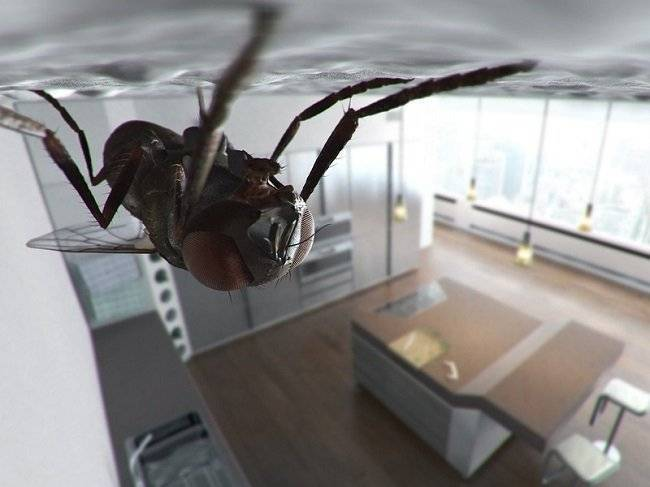 Как избавиться от мух в доме или в квартире? механические, химические и народные средства избавления от мух в квартире