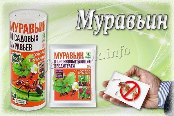 Муравьин — 10 г: инструкция по применению препарата от муравьев