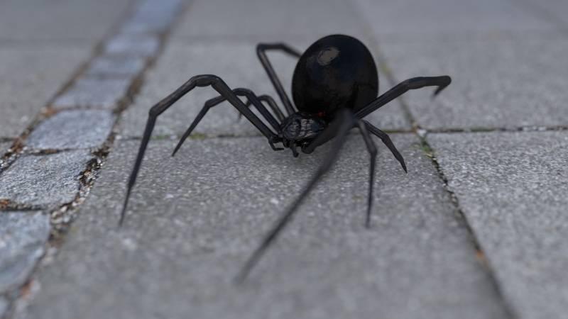 Неотложная помощь при укусах пауков