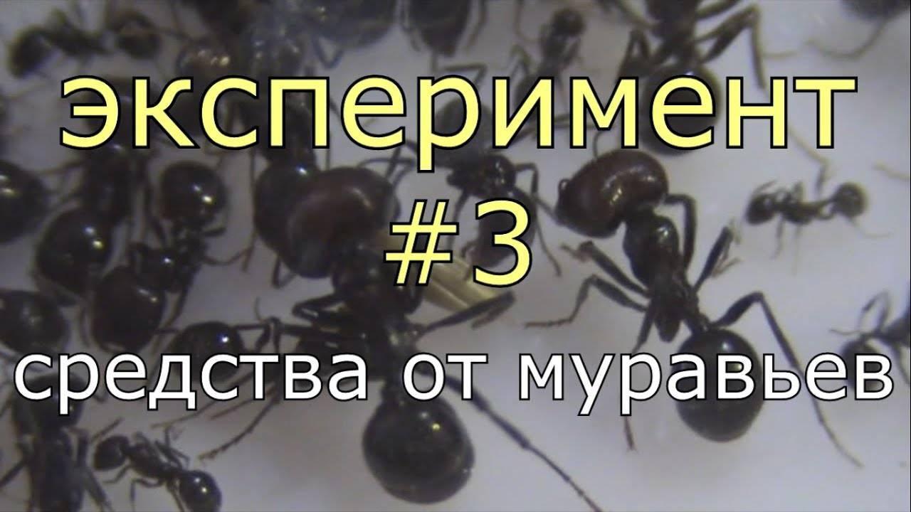 Как бороться с муравьями в огороде и дома эффективно