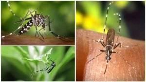 Зачем нужны комары?
