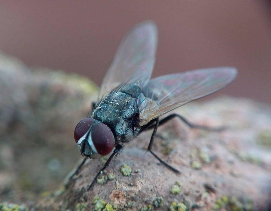 Народные средства от мух в доме