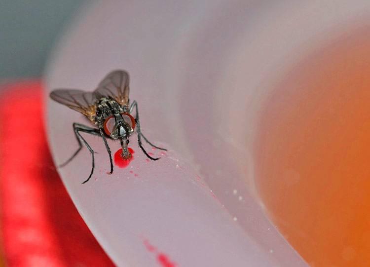 Каких людей обычно кусают мухи. почему муха в августе особенно злая и больно кусается? из-за чего комары сосут