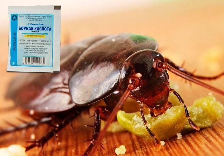 Отрава для муравьев из борной кислоты: рецепты смертельного угощения
