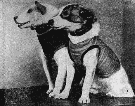 Может ли ушной клещ передается от животного к человеку?