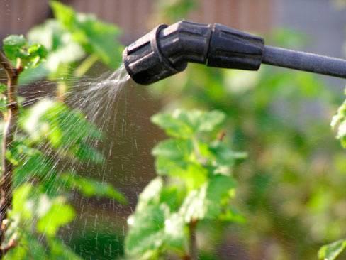 Как избавиться от тли на дереве народными и химическими средствами
