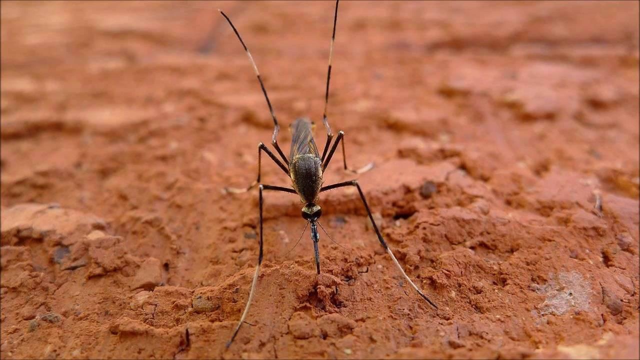 Звуки для отпугивания комаров