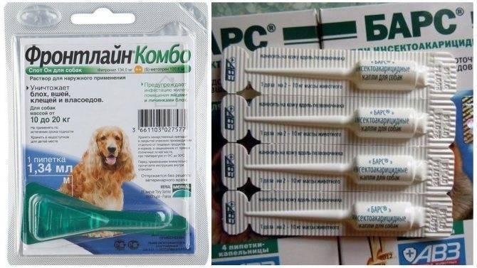 Инструкция по использованию капель от блох и клещей практик у собак